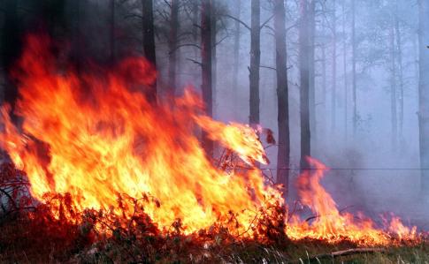 Пожар вчернобыльской зоне отчуждения охватил 25 гектаров