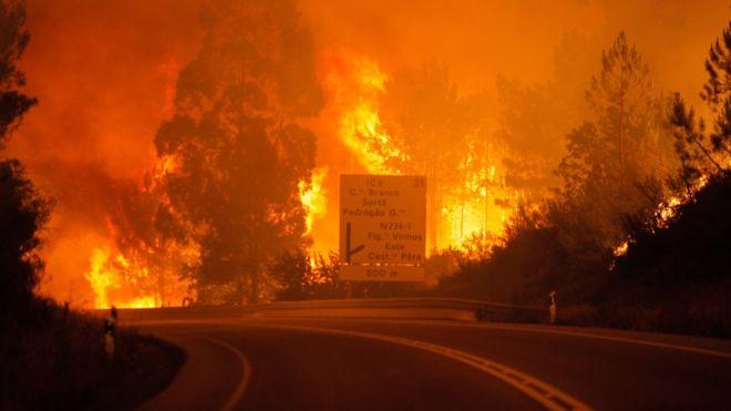 Через сильні лісові пожежі уПортугалії вже загинули 57 осіб
