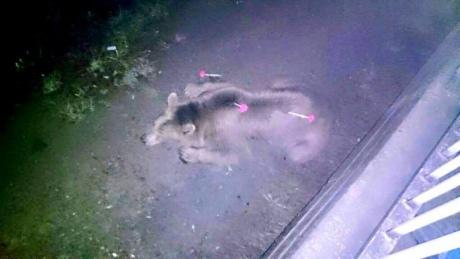 У Тбілісі повінь, загинули 8 людей. Із затопленого зоопарку розбіглися звірі. ФОТО 8