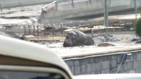 У Тбілісі повінь, загинули 8 людей. Із затопленого зоопарку розбіглися звірі. ФОТО 12
