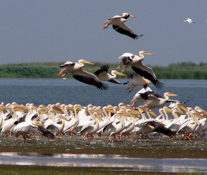 Для птахів біосферний заповідник - рідний дім