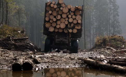 Карпати і далі вирубуватимуть, а Прикарпаття – підтоплюватиме. У Порошенка пояснили вето на закон про контрабанду лісу