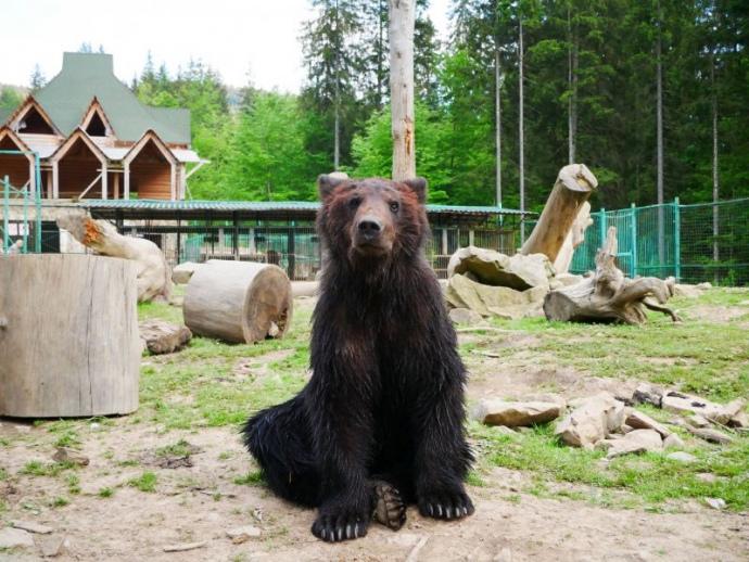 ведмеди, 10 найцікавіших місць, які варто відвідати в Закарпатті