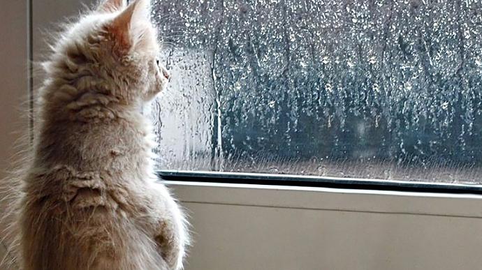 В воскресенье будет прохладно, местами дожди | Украинская правда