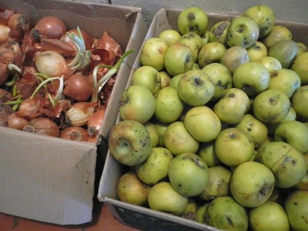 Елітні яблука по 14 гривень і проросла цибуля