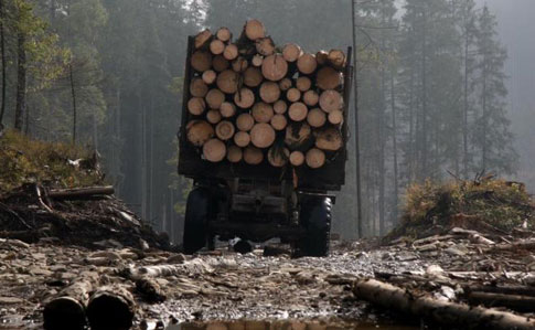 Фірма сина Луценка фігурує у справі ДБР про контрабанду лісу – ЗМІ ...