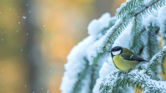 Погода: синоптики попереджають про сніг та нічні морози