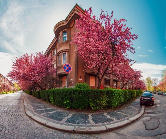 Ужгород , сакура , 10 найцікавіших місць, які варто відвідати в Закарпатті