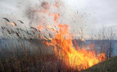 bdef019 pozhezha ocheret - За теплую зиму возросло количество пожаров – ГСЧС