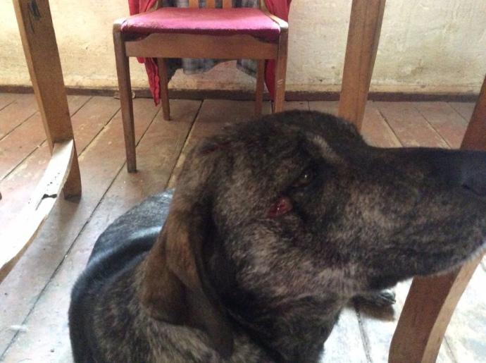 Лакарен опублікував фото пораненої собаки