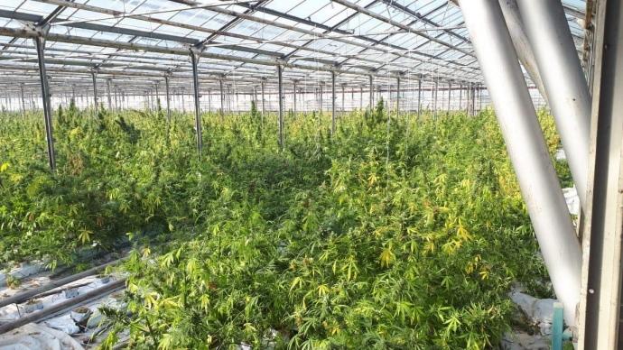 Марихуана тонны семена конопли indica купить
